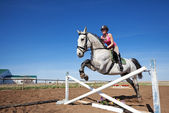 Show Jumper — Stock Photo