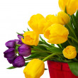 Spring Tulips — Stock Photo #9379057