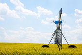 Pivot in Canola Field — Stock Photo