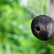 Natural Birdhouse — Stock Photo