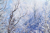 Frosty beautiful weather in winter. December — Stock Photo