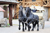 A carriage with black horses in the village — Stock Photo
