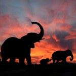 Elephants Enjoy a Spectacular Sunset on the Serengeti — Stock Photo