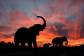 Elephants Enjoy a Spectacular Sunset on the Serengeti — Stock Photo
