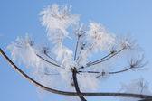 Flor congelada — Foto de Stock