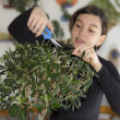 Girl trimming small olive tree — Stock Photo