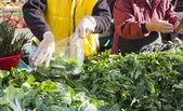 продажа органические овощи на рынке — Стоковое фото