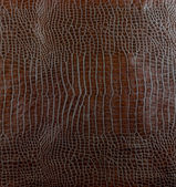 Leather crocodile — Stock Photo