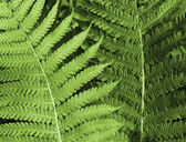 Fern background — 图库照片
