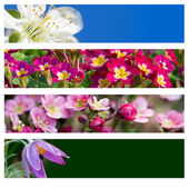 Floral banner — Stock Photo
