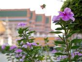 Fleurs violettes — Photo