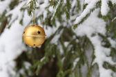Golden bell op de pine — Stockfoto