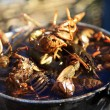 Cauldron crayfish — Stock Photo #10488024