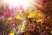 Web de mañana de verano — Foto de Stock