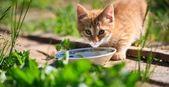 Cat milk — Stock Photo
