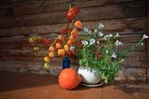 Pumpkin physalis flowers — Stock Photo