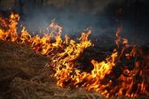 Fire grass — Stock Photo