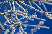 Led větev — Stock fotografie
