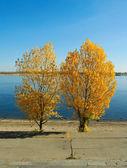 Autumn sky leaf two trees — Stock Photo