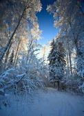 冬季森林 — 图库照片