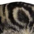 Fur Pattern 2. — Stock Photo
