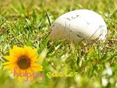 Easter eggs on the grass and wishes — Stock Photo