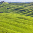 Tuscany, undulating terrain on sunset Crete Senesi rural landsca — Stock Photo #10208772