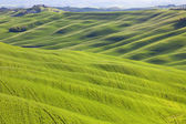 Tuscany, undulating terrain on sunset Crete Senesi rural landsca — Stock Photo
