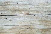 Old worm eaten tree trunk wood texture — Stock Photo