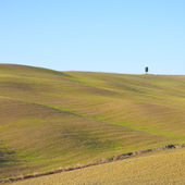 Tuscany: typical landscape. Rolling hills and a tree. — Stock Photo