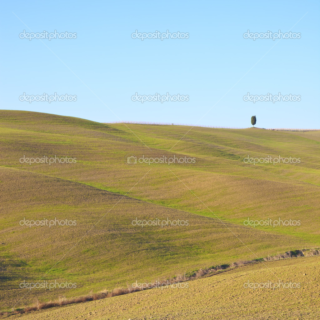 A typical tuscan landscape with soft rolling hills and a lonely tree. Color image was taken in Val d'Orcia, Crete Senesi near Siena.  Stock Photo #9812573