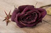 Dry red rose and the thorn acacia tree on the old table — Stock Photo