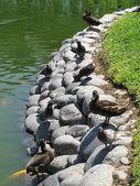 Vogels op de rotsen — Stockfoto