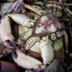 Big alive crayfish — Stock Photo
