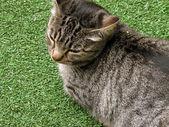 Lilla kattunge leker i gräset — Stockfoto