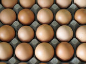Close up of eggs in cardboard container — Stock Photo