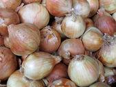 Close-up of fresh white onions — Stock Photo