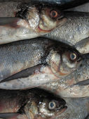 Skaldjur på is på fiskmarknaden — Stockfoto