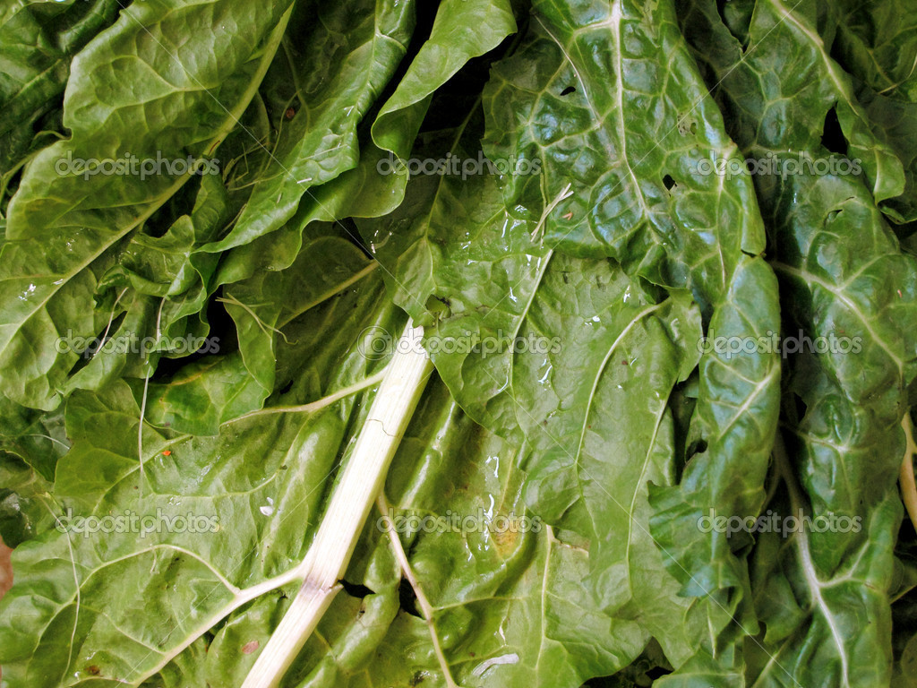 Fresh spinach and lettuce — Stock Photo #9854471