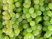 Uvas verdes frescas — Foto de Stock
