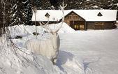 Deer statue in snow — Stock Photo