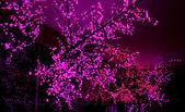 Roze lichten — Stockfoto