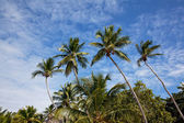 Vier palmen op saona eiland — Stockfoto