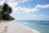 Saona island beach palm 2 — Stock Photo
