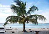 Saona island beach 4 — Stock Photo