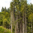 Trees parabola — Stock Photo #9457399