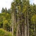 Trees parabola — Stock Photo