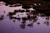 Medziboz swamp 2 — Stock Photo