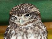 Beautiful owl's eye's — Stock Photo