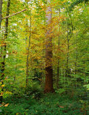 Colors in the wood — Stockfoto